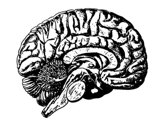 Suchtforschung: Wie Rauchen das Gehirn manipuliert