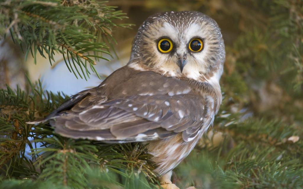 owl-eyes